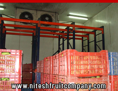 nitesh fruit company - banana cold storage in ludhiana punjab - banana ripening plant in ludhiana punjab - banana suppliers distributors in ludhiana punjab india